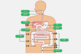 胃食道逆流症とは